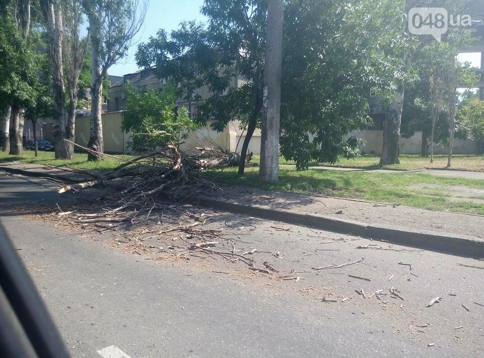 Огромный тополь порвал провода и упал на одесской Перессыпи (ФОТО), фото-1