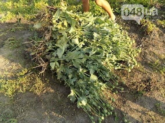 Более полсотни кустов мака нашли у жителя Одесской области (ФОТО), фото-3