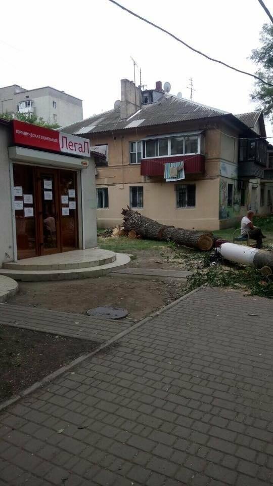 В Одессе на тротуар рухнул гигантский тополь (ФОТО), фото-1