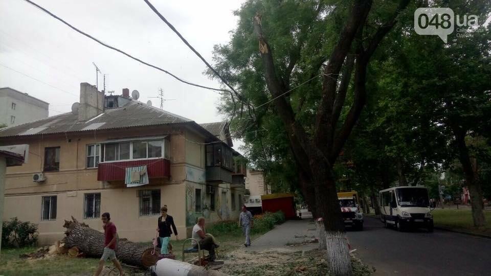 В Одессе на тротуар рухнул гигантский тополь (ФОТО), фото-2