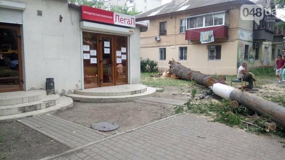 В Одессе на тротуар рухнул гигантский тополь (ФОТО), фото-3