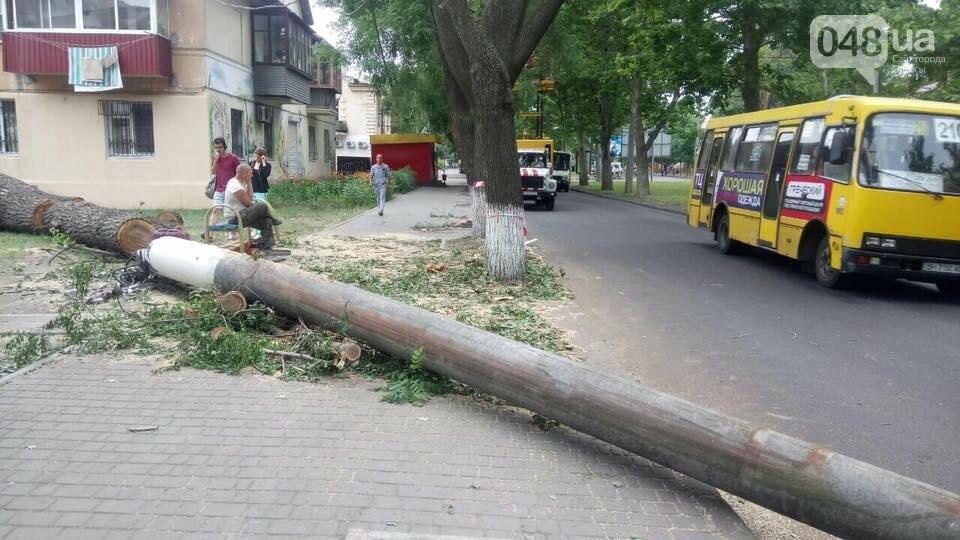 В Одессе на тротуар рухнул гигантский тополь (ФОТО), фото-4