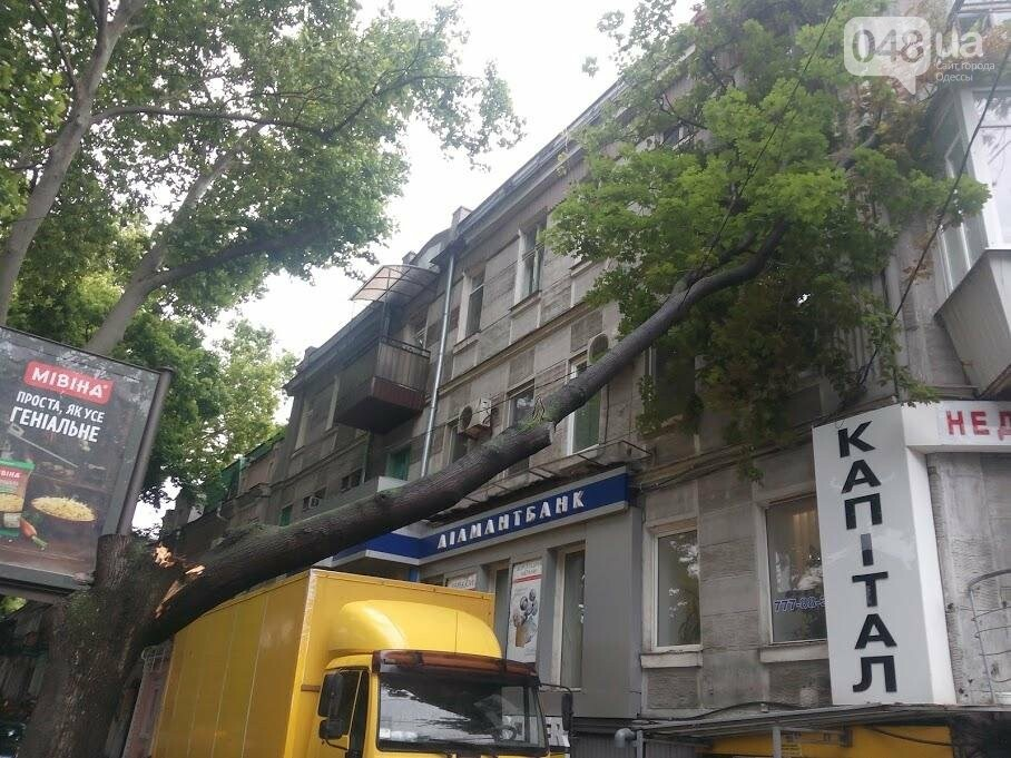 В центре Одессы огромная ветка рухнула на жилой дом (ФОТО), фото-1