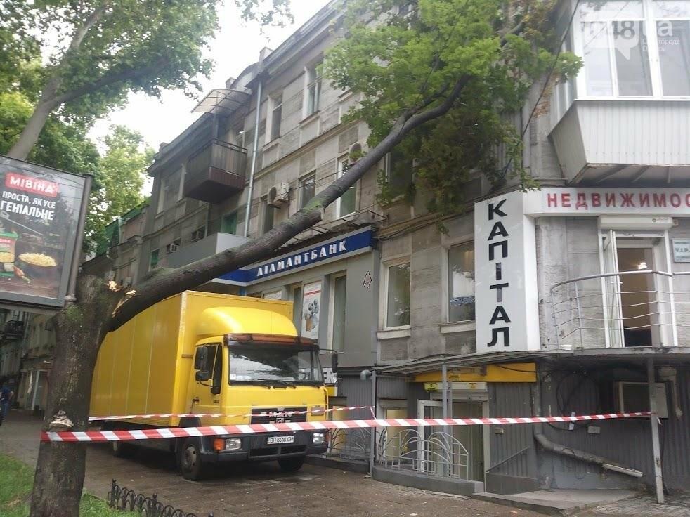 В центре Одессы огромная ветка рухнула на жилой дом (ФОТО), фото-3