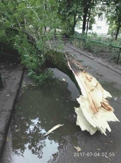 Ураган повалил в Одессе 12 деревьев (ФОТО), фото-1