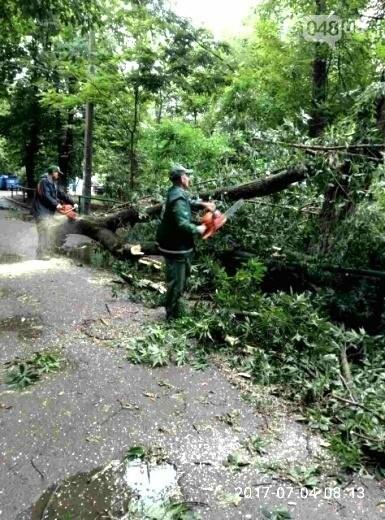 Ураган повалил в Одессе 12 деревьев (ФОТО), фото-2