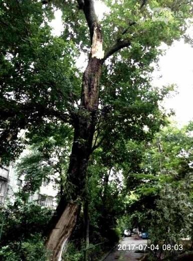Ураган повалил в Одессе 12 деревьев (ФОТО), фото-3