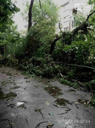 Ураган повалил в Одессе 12 деревьев (ФОТО), фото-4
