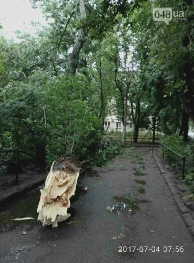 Ураган повалил в Одессе 12 деревьев (ФОТО), фото-5