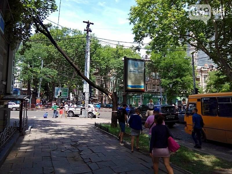 В центре Одессы дерево раскололось и угрожающе повисло над головами прохожих (ФОТОФАКТ), фото-5