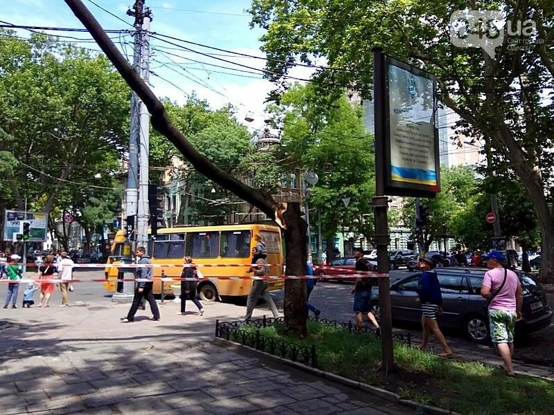 В центре Одессы дерево раскололось и угрожающе повисло над головами прохожих (ФОТОФАКТ), фото-4