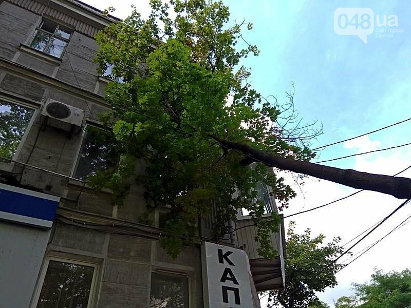 В центре Одессы дерево раскололось и угрожающе повисло над головами прохожих (ФОТОФАКТ), фото-2