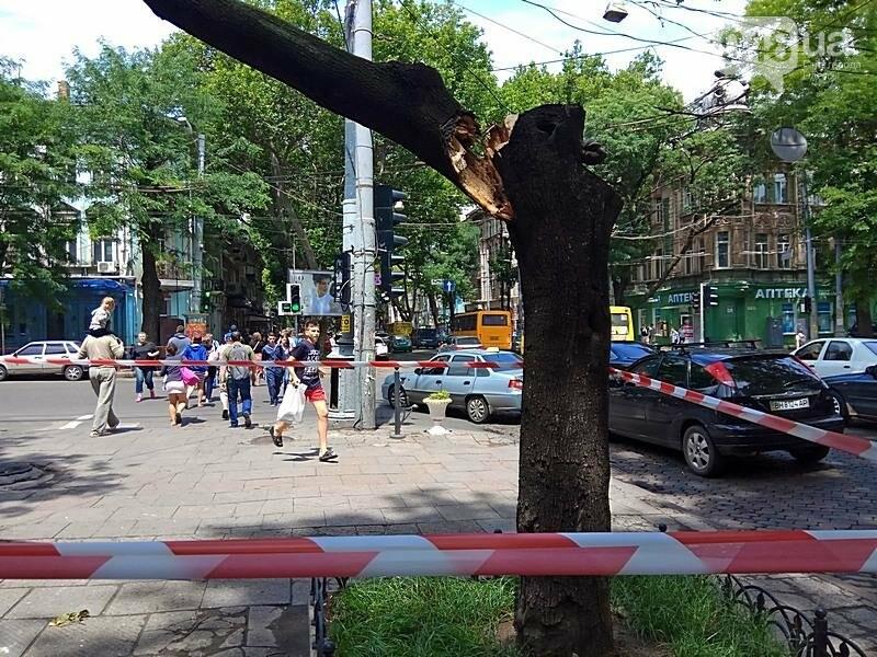 В центре Одессы дерево раскололось и угрожающе повисло над головами прохожих (ФОТОФАКТ), фото-3
