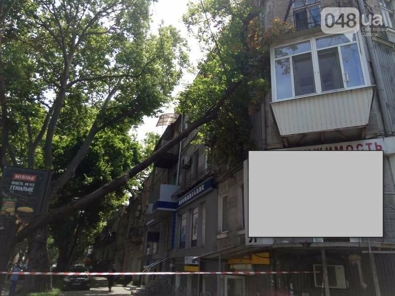 В центре Одессы дерево раскололось и угрожающе повисло над головами прохожих (ФОТОФАКТ), фото-1