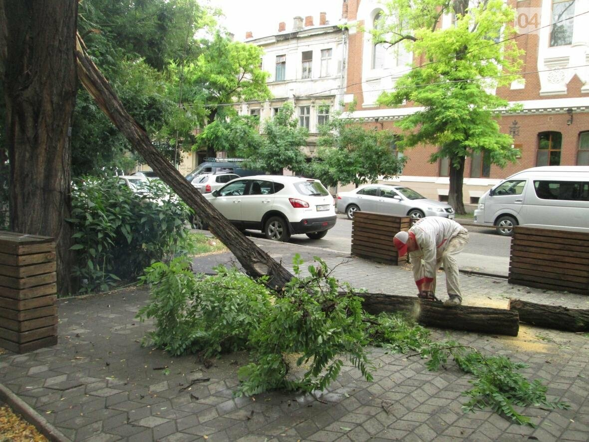 В Одессе гигантская ветка рухнула на террасу ресторана (ФОТО), фото-2