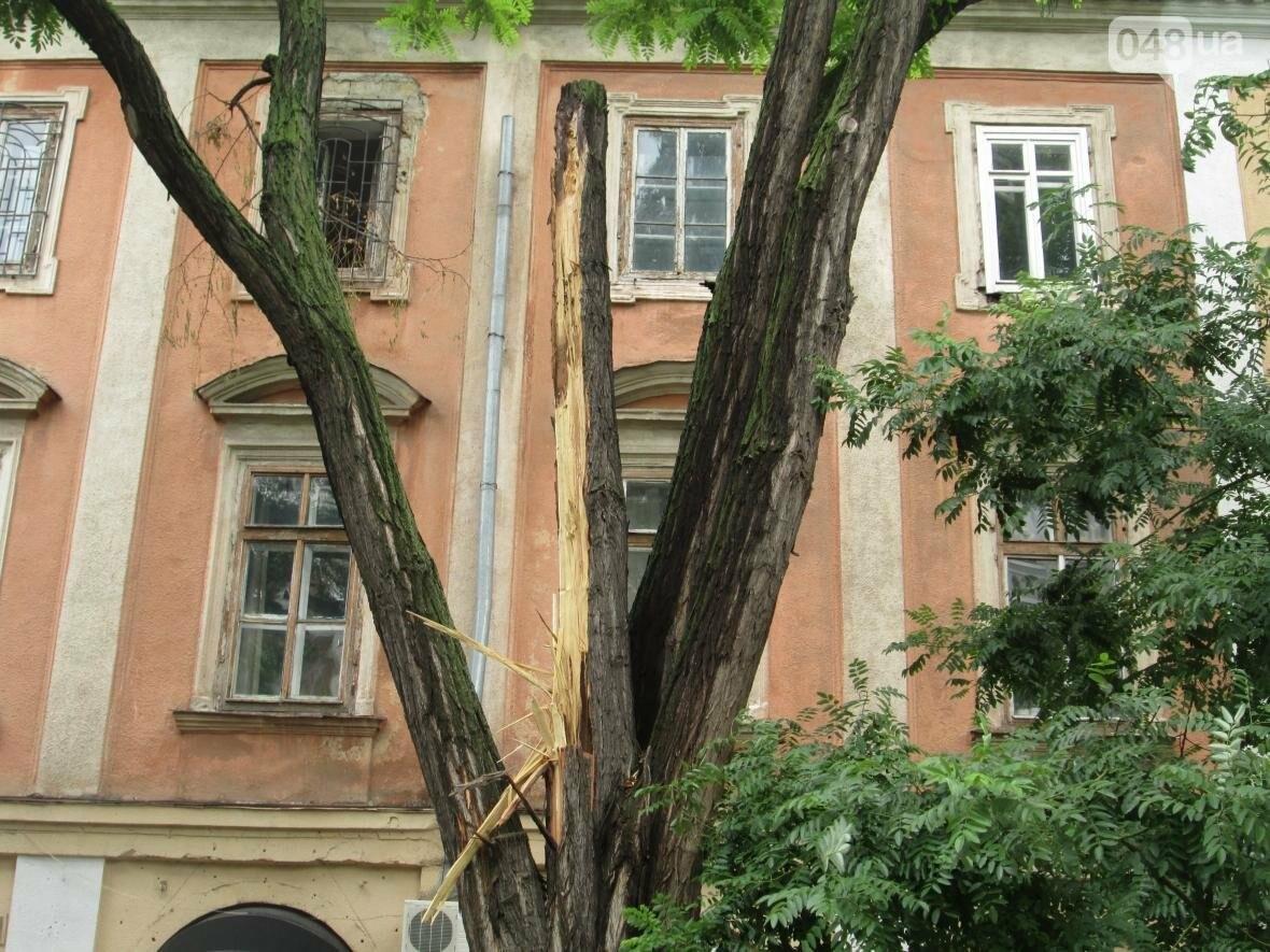В Одессе гигантская ветка рухнула на террасу ресторана (ФОТО), фото-4