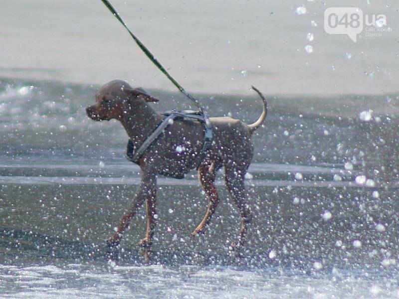 Фонтаны спасли от жары маленьких одесситов: фоторепортаж (ФОТО), фото-5