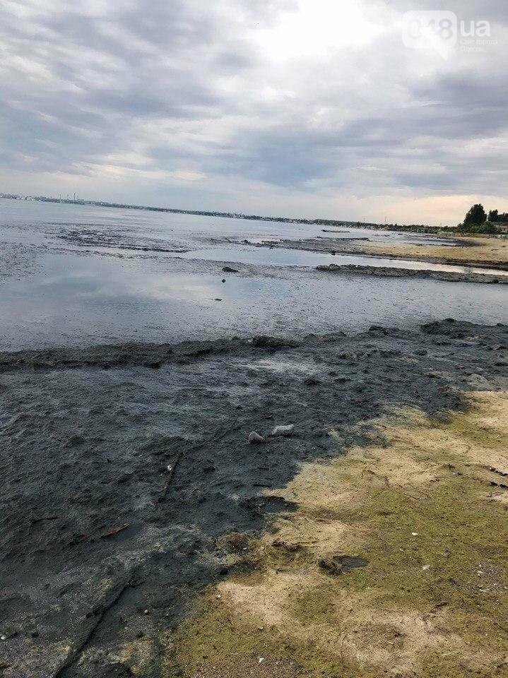 В Одессе загнивает пляж: у моря находиться невозможно (ФОТО), фото-3