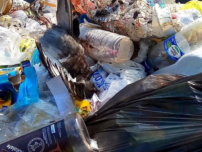 Центр Одессы завален мусором после выходных (ФОТО), фото-11