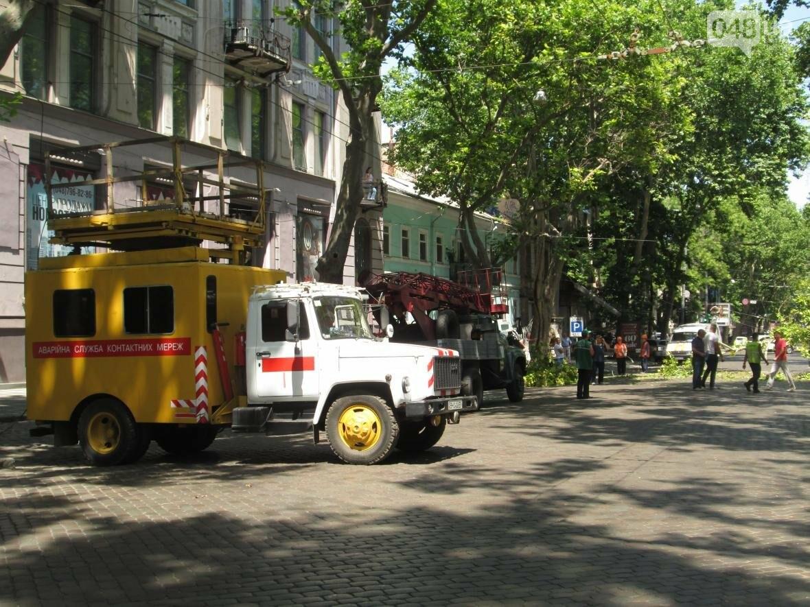 В центре Одессы заблокировано движение - ликвидируют последствия обвала зеленого исполина (ФОТО), фото-4