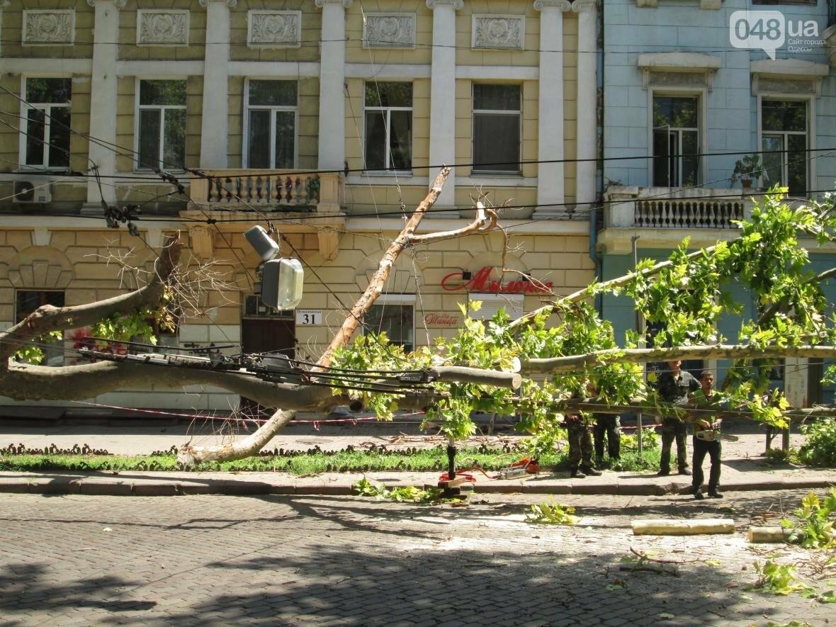 В центре Одессы заблокировано движение - ликвидируют последствия обвала зеленого исполина (ФОТО), фото-6