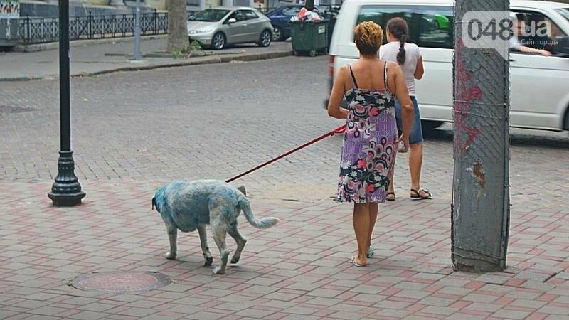 По центру Одессы гуляла дама с синей собакой (ФОТОФАКТ), фото-1