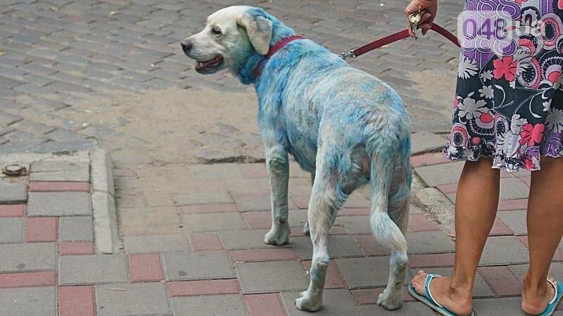 По центру Одессы гуляла дама с синей собакой (ФОТОФАКТ), фото-2