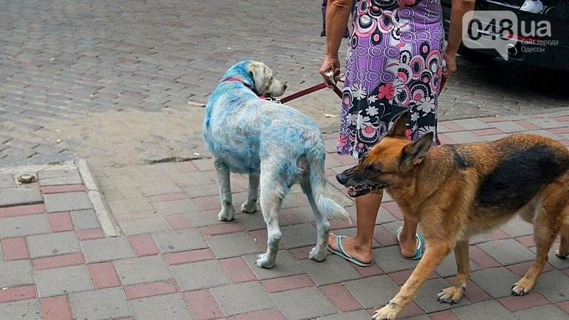 По центру Одессы гуляла дама с синей собакой (ФОТОФАКТ), фото-3