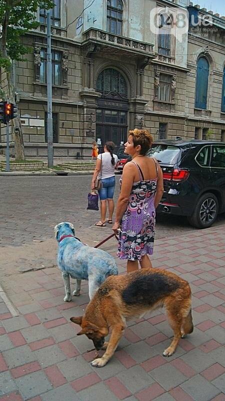 По центру Одессы гуляла дама с синей собакой (ФОТОФАКТ), фото-4