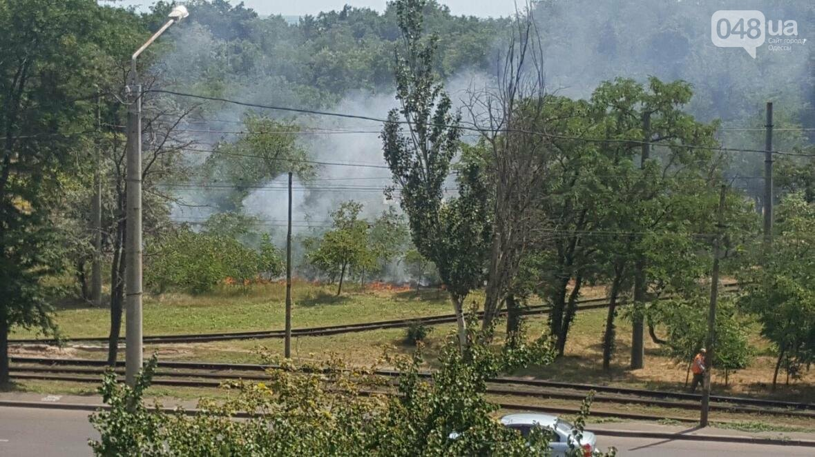 В Одессе загорелся гидропарк (ФОТО), фото-1