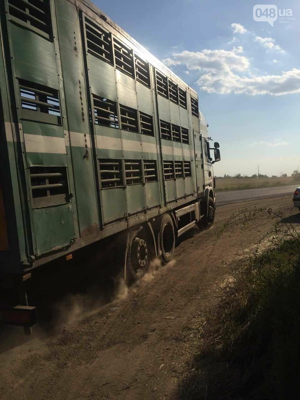 Из-за километров стоящих фур одесситы въезжают в город по полям (ФОТО), фото-3