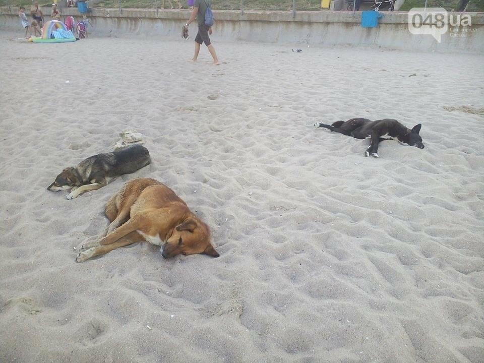 На статусном пляже под Одессой - нашествие бездомных собак (ФОТО), фото-1