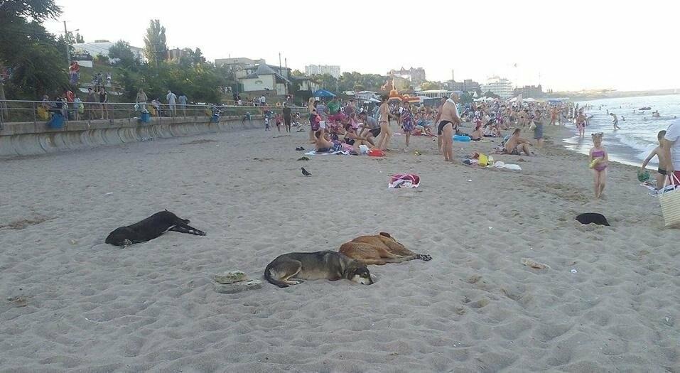 На статусном пляже под Одессой - нашествие бездомных собак (ФОТО), фото-2