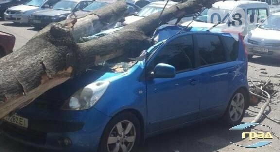 В центре Одессы дерево раздавило автомобиль (ФОТО), фото-1