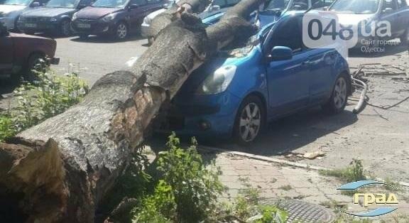 В центре Одессы дерево раздавило автомобиль (ФОТО), фото-2