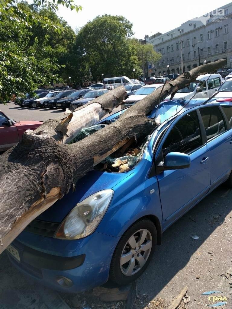 В центре Одессы дерево раздавило автомобиль (ФОТО), фото-4