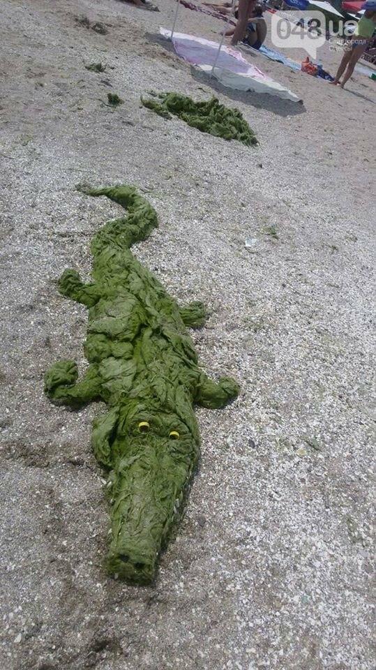 На одесских пляжах из-за водорослей невозможно зайти в воду (ФОТО), фото-5