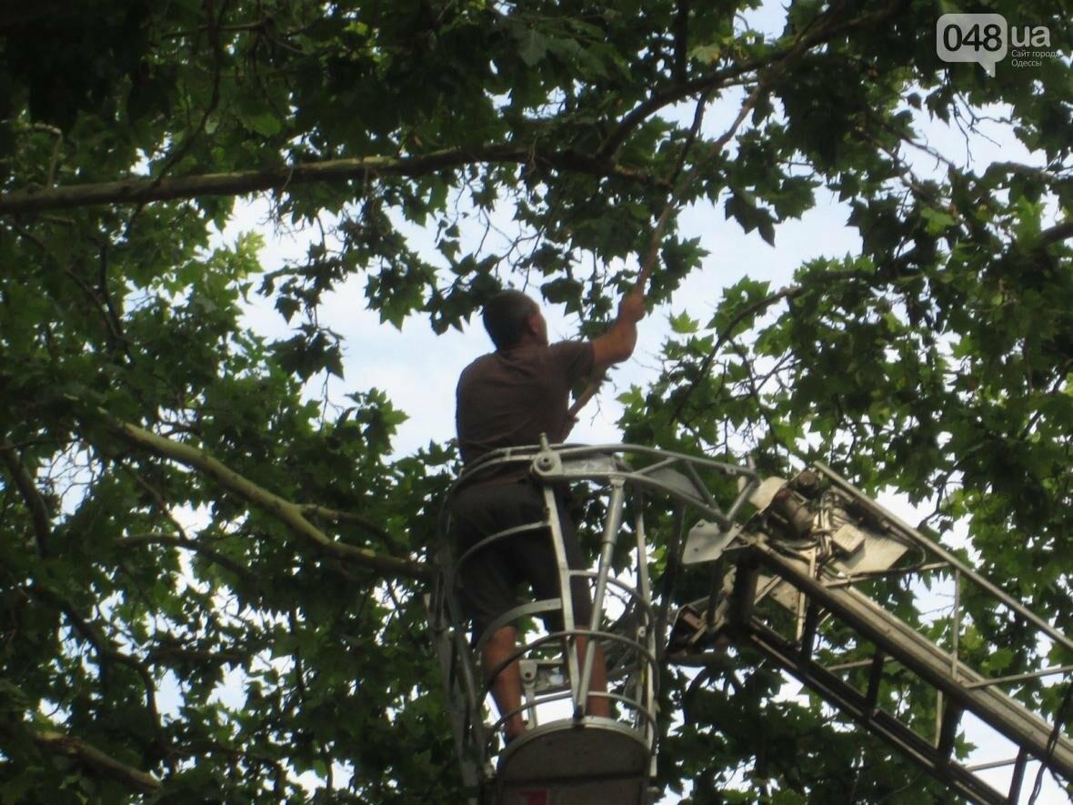 Перестраховались: В Одессе коммунальщики «прощупывали» гигантские деревья (ФОТО), фото-2