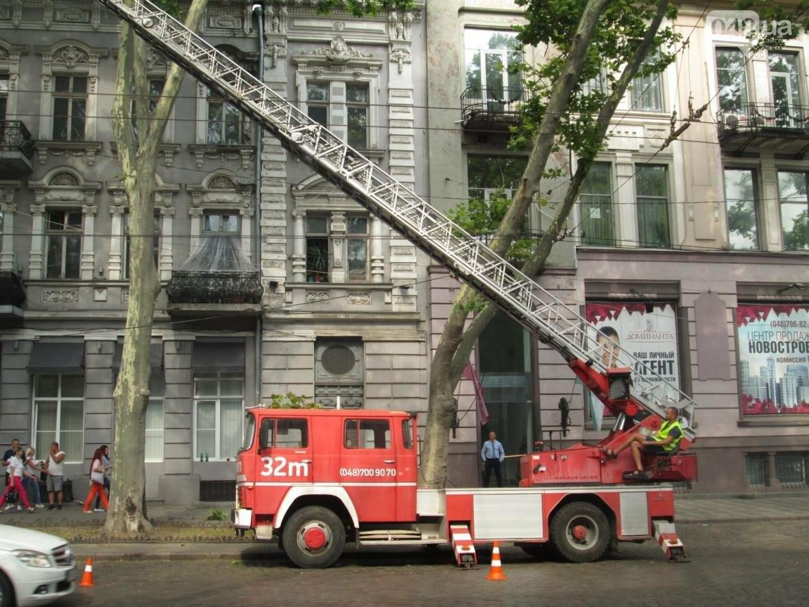 Перестраховались: В Одессе коммунальщики «прощупывали» гигантские деревья (ФОТО), фото-3