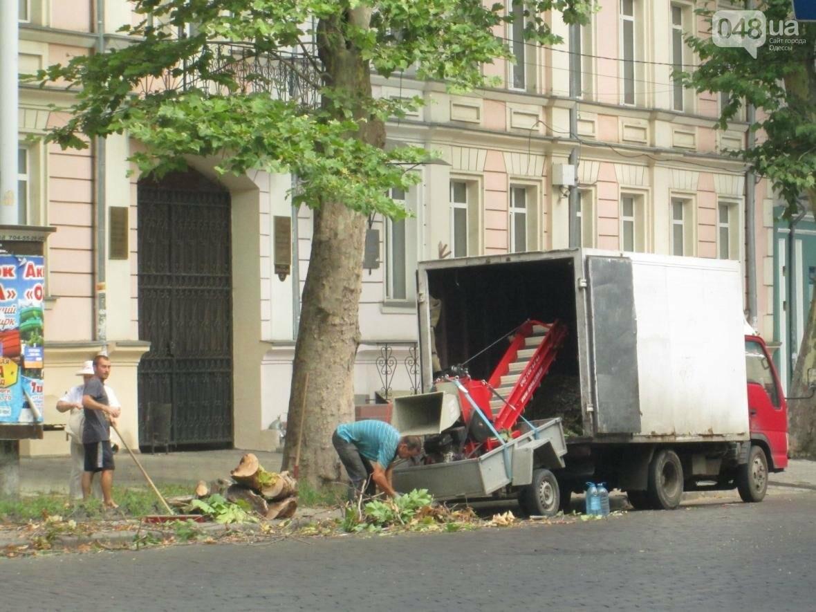 Перестраховались: В Одессе коммунальщики «прощупывали» гигантские деревья (ФОТО), фото-4