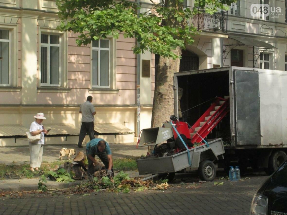 Перестраховались: В Одессе коммунальщики «прощупывали» гигантские деревья (ФОТО), фото-1