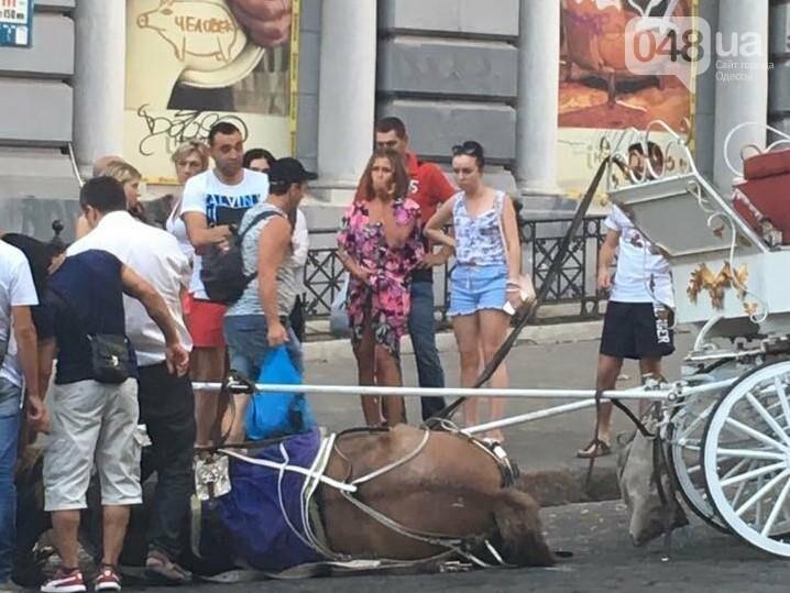 В центре Одессы загнали почти до смерти лошадь (ФОТО, ВИДЕО, ОБНОВЛЕНО), фото-1