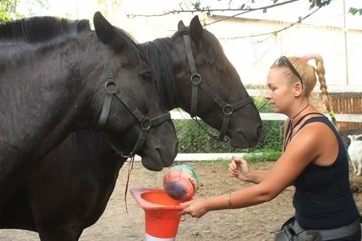 Коневод рассказала, как на самом деле мучают лошадей в центре Одессы (ФОТО), фото-5