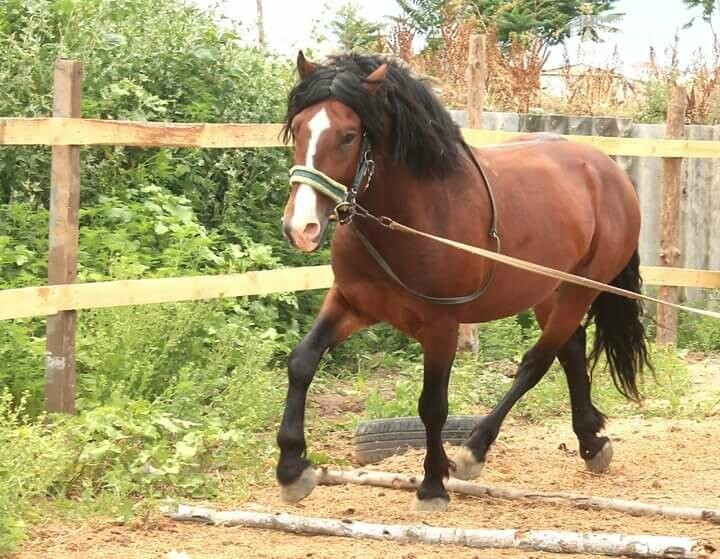 Коневод рассказала, как на самом деле мучают лошадей в центре Одессы (ФОТО), фото-3