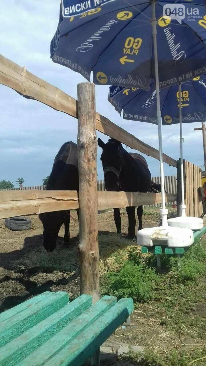 Коневод рассказала, как на самом деле мучают лошадей в центре Одессы (ФОТО), фото-2