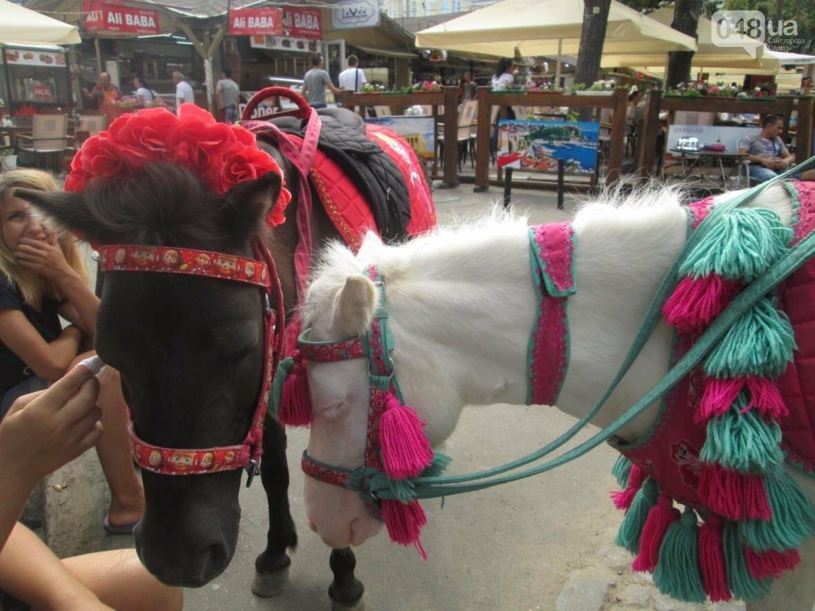 В Одессе на Дерибасовской лошадей поят из туалета (ФОТО, ВИДЕО), фото-2