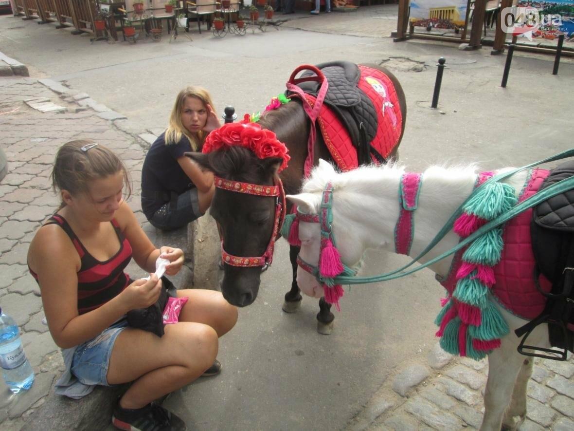 В Одессе на Дерибасовской лошадей поят из туалета (ФОТО, ВИДЕО), фото-3