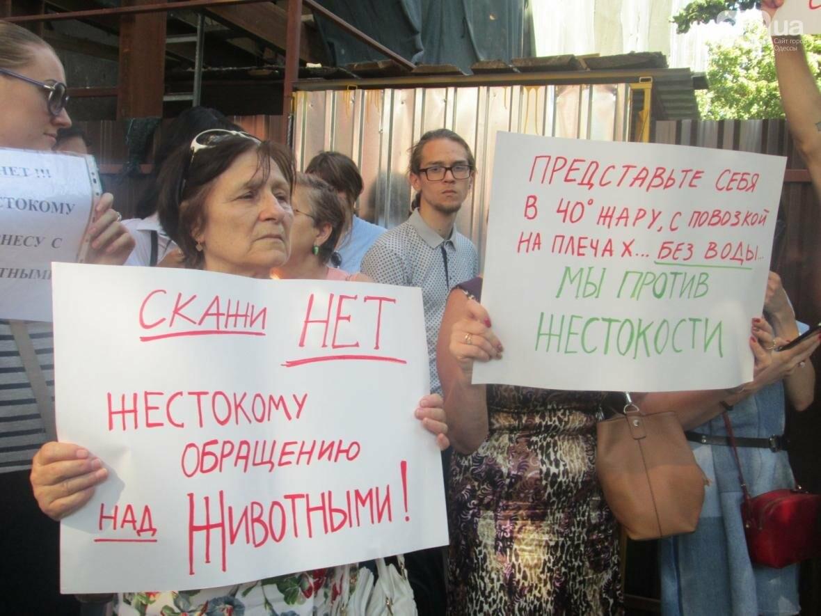 Одесситы заступились за лошадей (ФОТО, ВИДЕО), фото-5