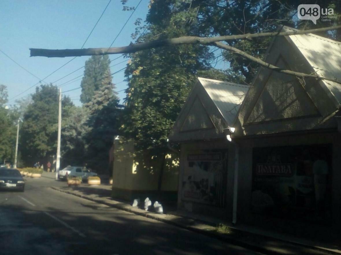 В Одессе огромная ветка откололась от дерева и повисла над дорогой (ФОТО), фото-2