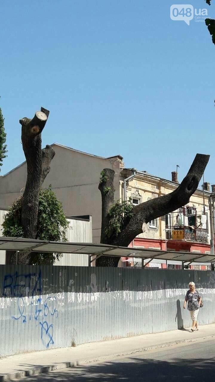 """На Болгарской  в ходе строительства  """"Жемчужины""""  уничтожены  деревья. Горзелентрест  составил акт (Фото), фото-1"""